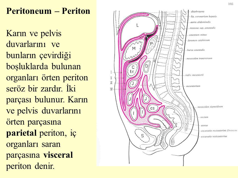 Peritoneum – Periton