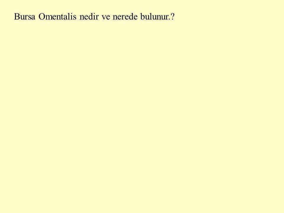 Bursa Omentalis nedir ve nerede bulunur.