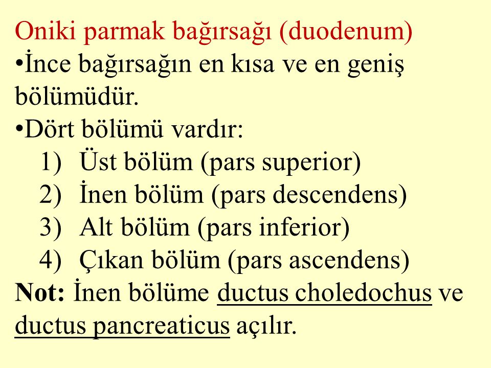 Oniki parmak bağırsağı (duodenum)