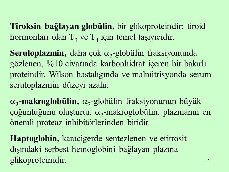 Tiroksin bağlayan globülin, bir glikoproteindir; tiroid hormonları olan T3 ve T4 için temel taşıyıcıdır.