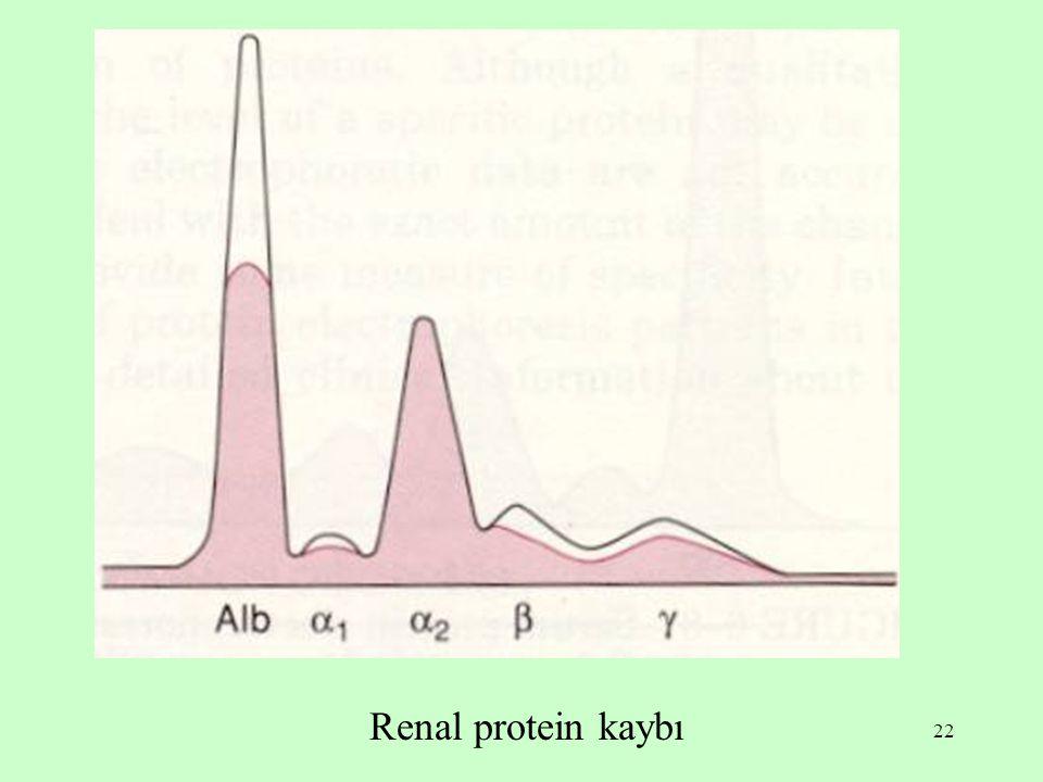 Renal protein kaybı