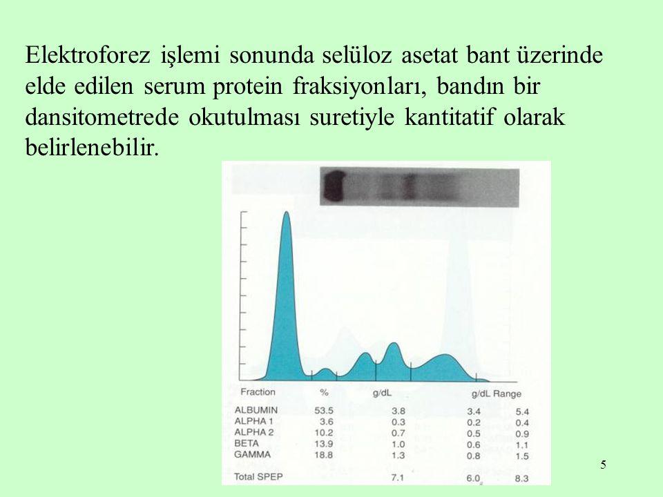 Elektroforez işlemi sonunda selüloz asetat bant üzerinde elde edilen serum protein fraksiyonları, bandın bir dansitometrede okutulması suretiyle kantitatif olarak belirlenebilir.