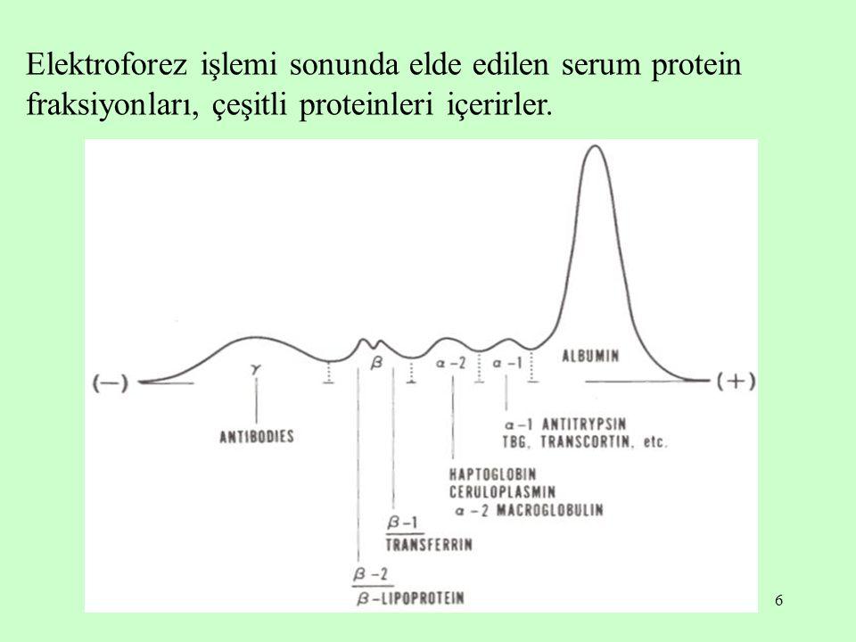 Elektroforez işlemi sonunda elde edilen serum protein fraksiyonları, çeşitli proteinleri içerirler.