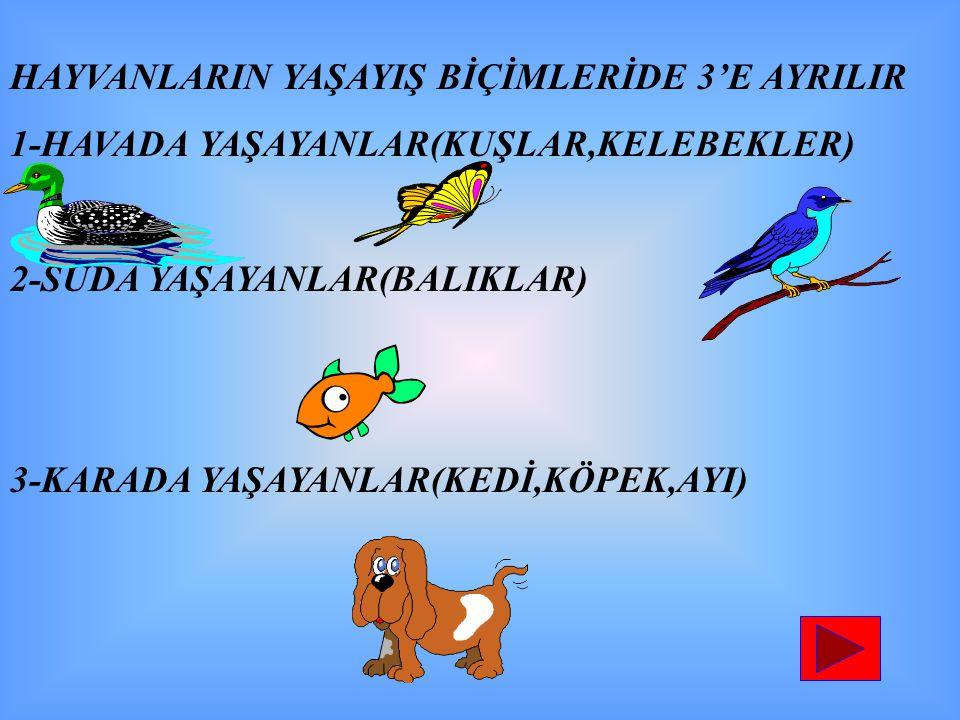 HAYVANLARIN YAŞAYIŞ BİÇİMLERİDE 3'E AYRILIR