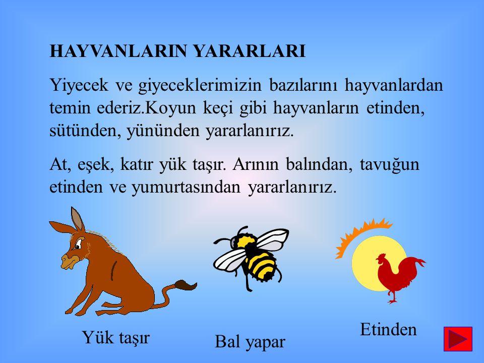 HAYVANLARIN YARARLARI