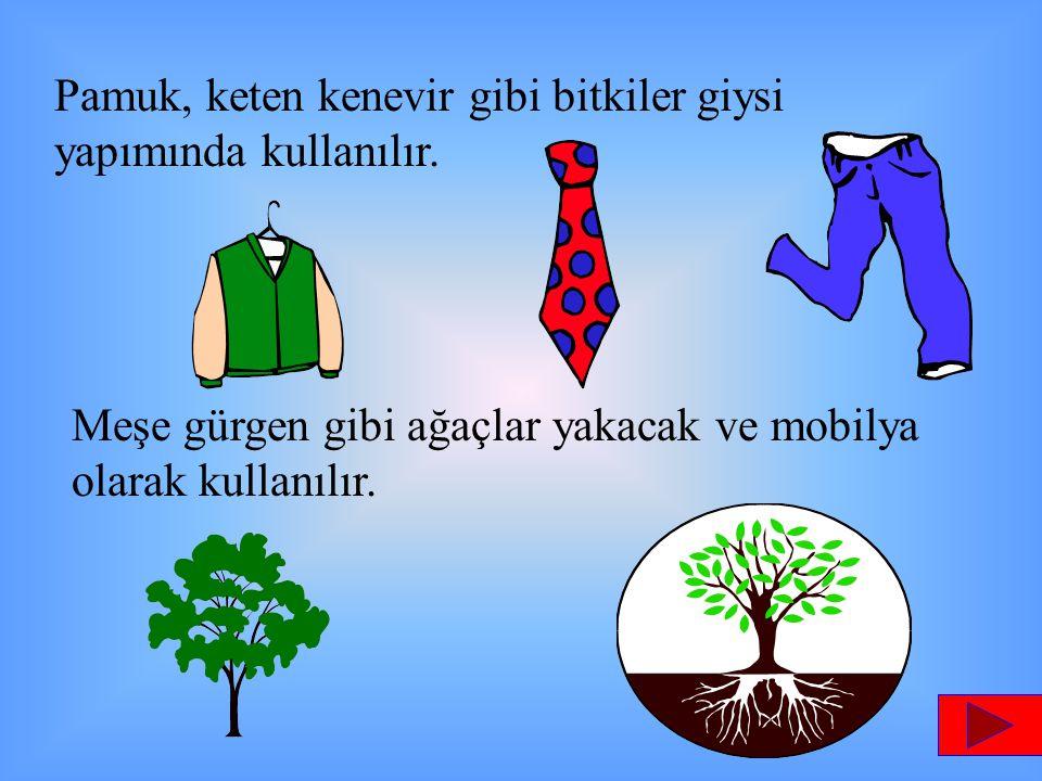 Pamuk, keten kenevir gibi bitkiler giysi yapımında kullanılır.