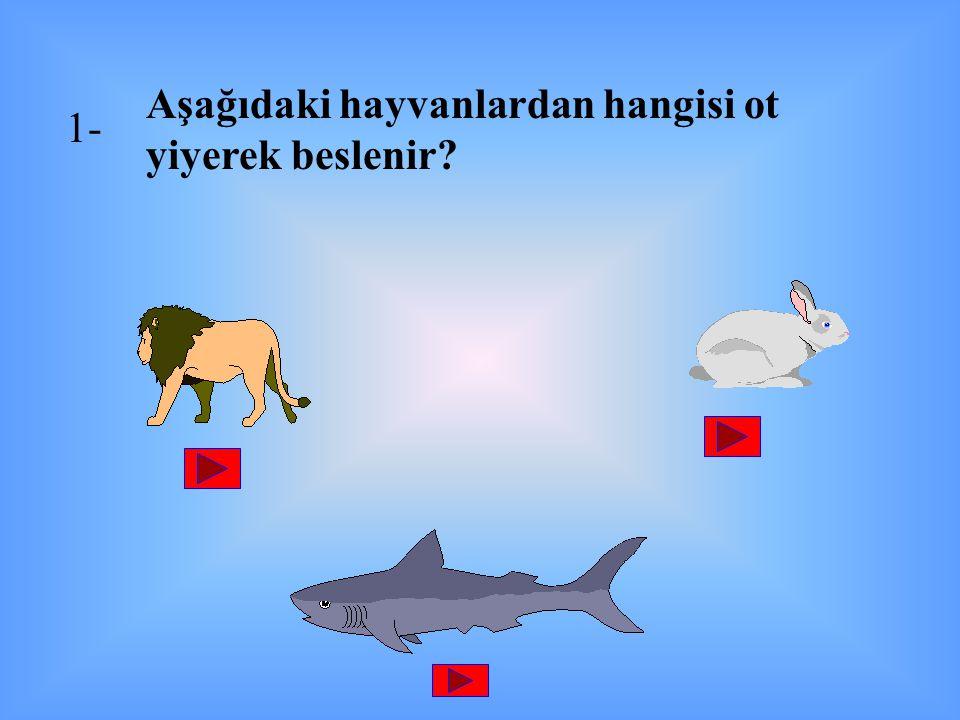 Aşağıdaki hayvanlardan hangisi ot yiyerek beslenir