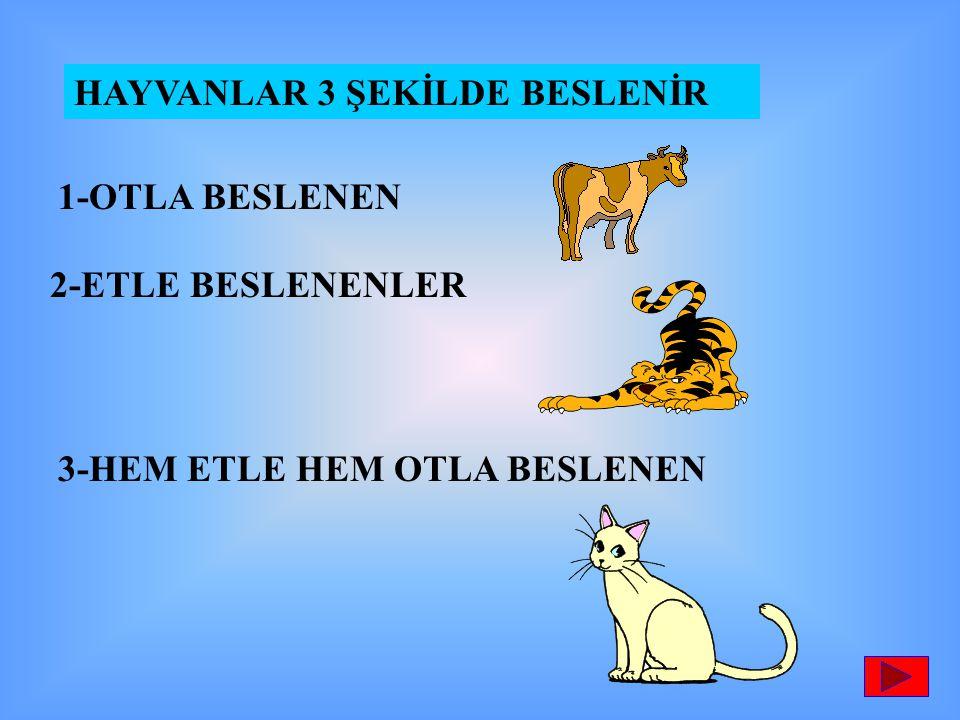 HAYVANLAR 3 ŞEKİLDE BESLENİR