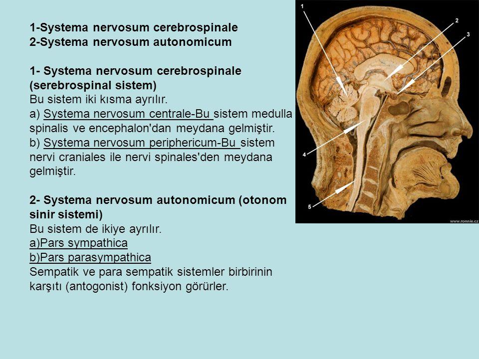 1-Systema nervosum cerebrospinale