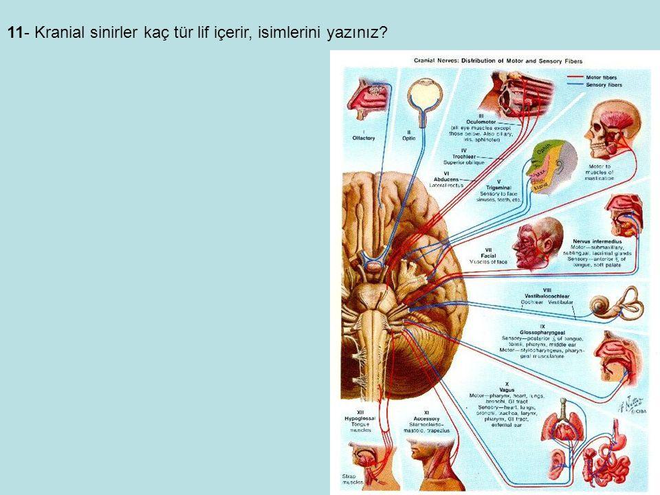11- Kranial sinirler kaç tür lif içerir, isimlerini yazınız