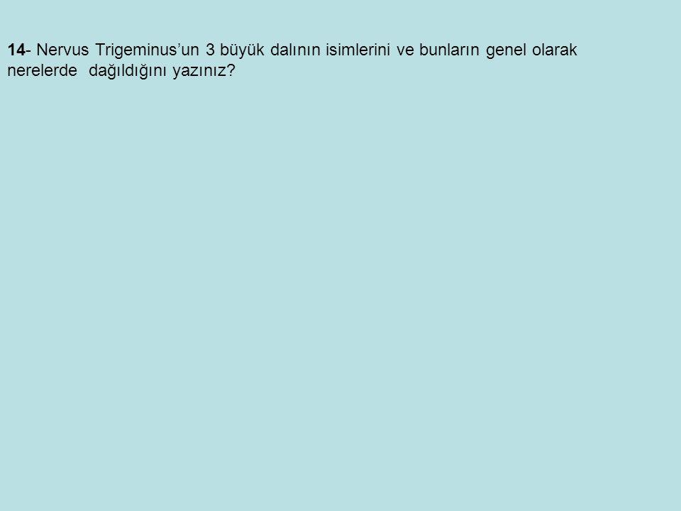 14- Nervus Trigeminus'un 3 büyük dalının isimlerini ve bunların genel olarak nerelerde dağıldığını yazınız