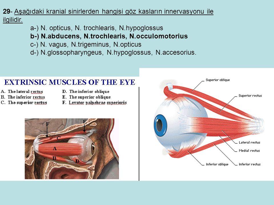 29- Aşağıdaki kranial sinirlerden hangisi göz kasların innervasyonu ile ilgilidir.
