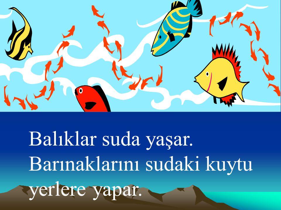 Balıklar suda yaşar. Barınaklarını sudaki kuytu yerlere yapar.
