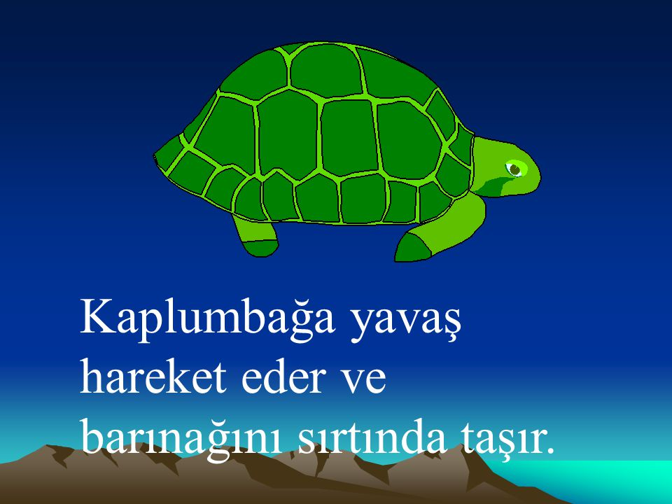Kaplumbağa yavaş hareket eder ve barınağını sırtında taşır.