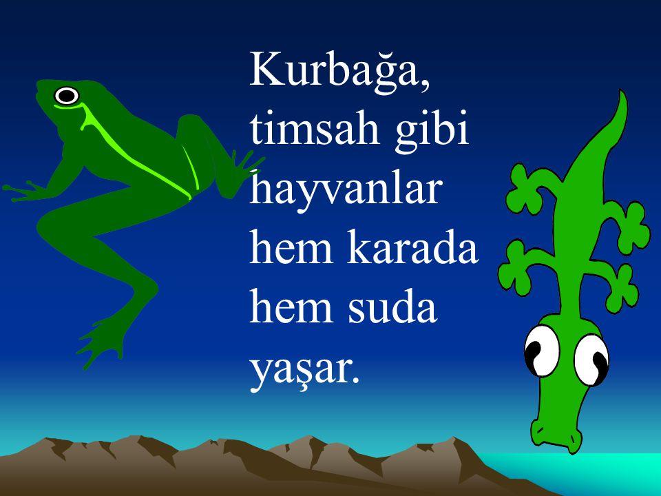 Kurbağa, timsah gibi hayvanlar hem karada hem suda yaşar.