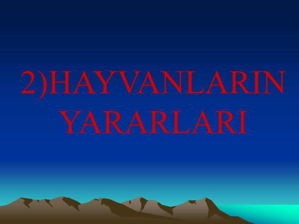 2)HAYVANLARIN YARARLARI