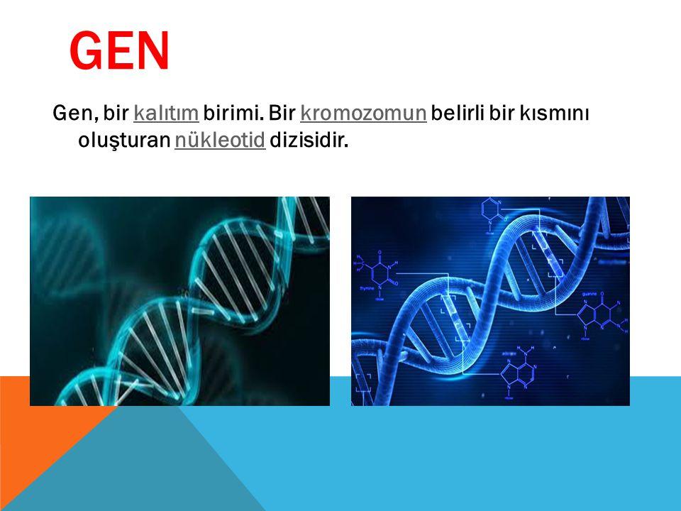 GEN Gen, bir kalıtım birimi. Bir kromozomun belirli bir kısmını oluşturan nükleotid dizisidir.