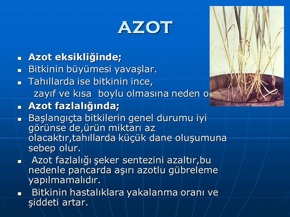AZOT Azot eksikliğinde; Bitkinin büyümesi yavaşlar.