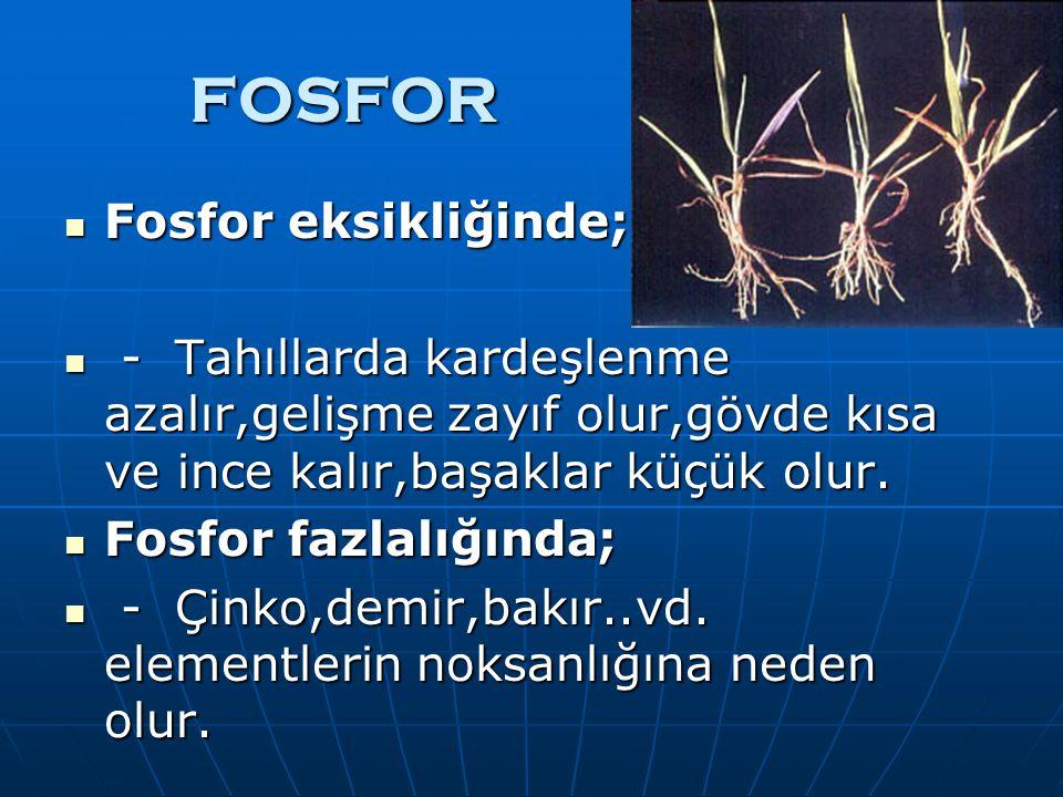 FOSFOR Fosfor eksikliğinde;