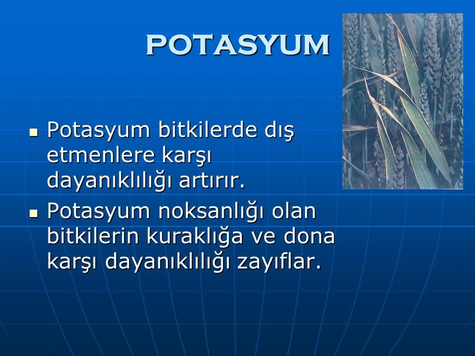 POTASYUM Potasyum bitkilerde dış etmenlere karşı dayanıklılığı artırır.