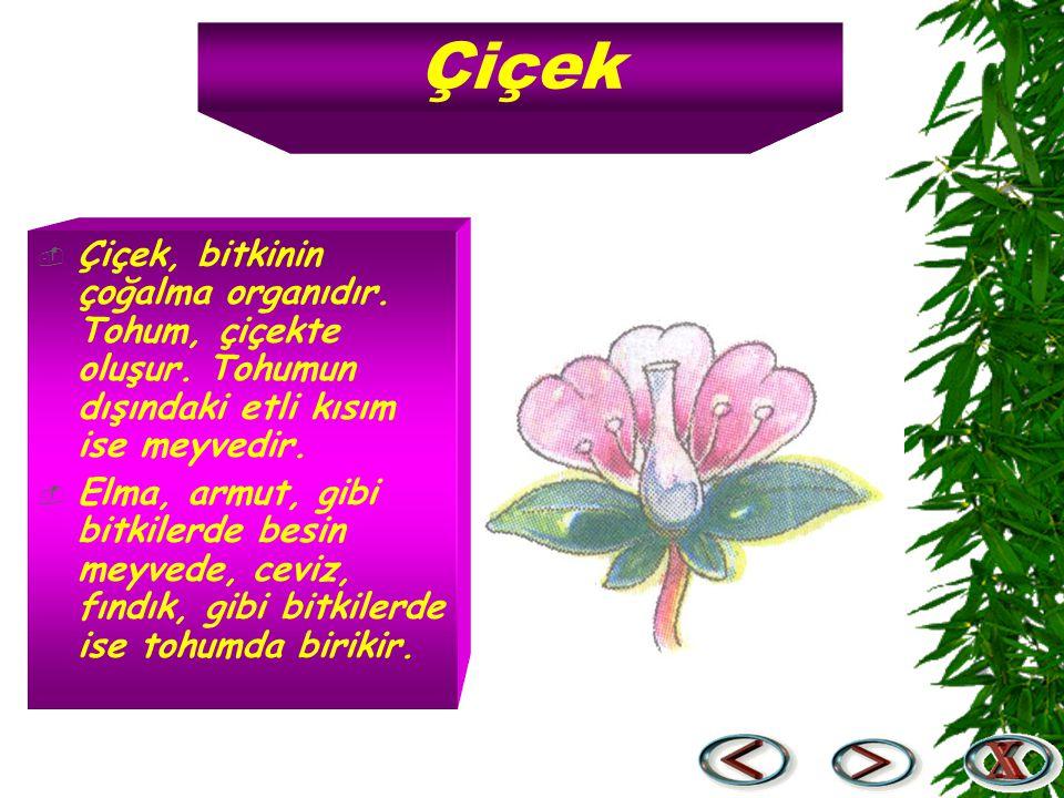 Çiçek Çiçek, bitkinin çoğalma organıdır. Tohum, çiçekte oluşur. Tohumun dışındaki etli kısım ise meyvedir.