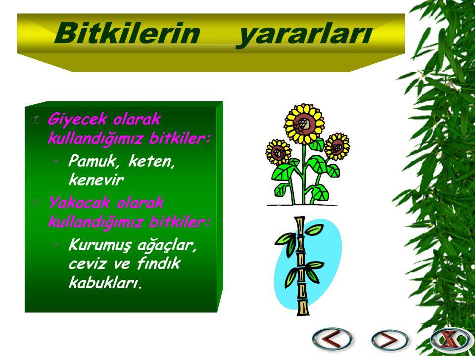 Bitkilerin yararları Giyecek olarak kullandığımız bitkiler:
