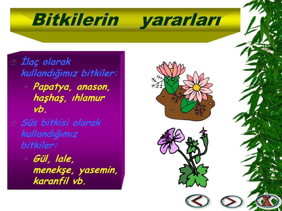 Bitkilerin yararları İlaç olarak kullandığımız bitkiler: