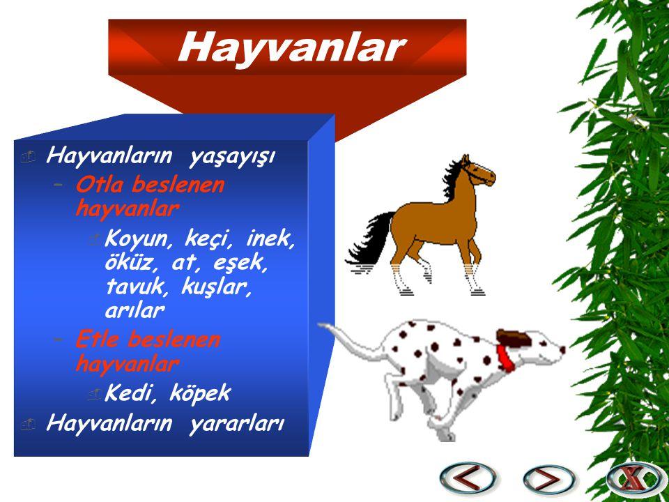 Hayvanlar Hayvanların yaşayışı Otla beslenen hayvanlar