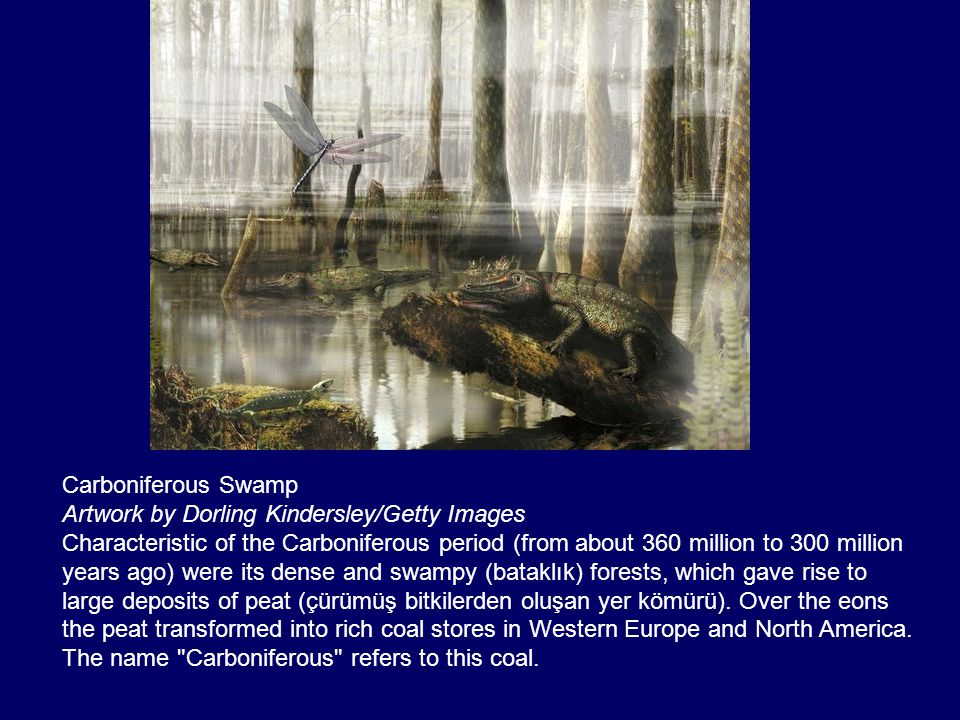 Carboniferous Swamp Artwork by Dorling Kindersley/Getty Images.