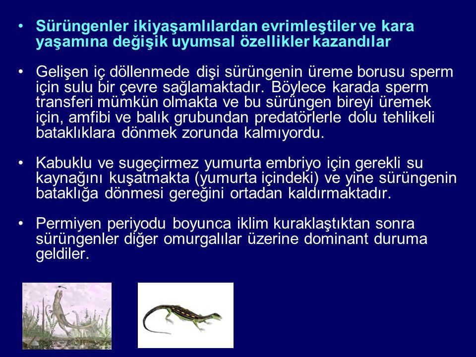Sürüngenler ikiyaşamlılardan evrimleştiler ve kara yaşamına değişik uyumsal özellikler kazandılar