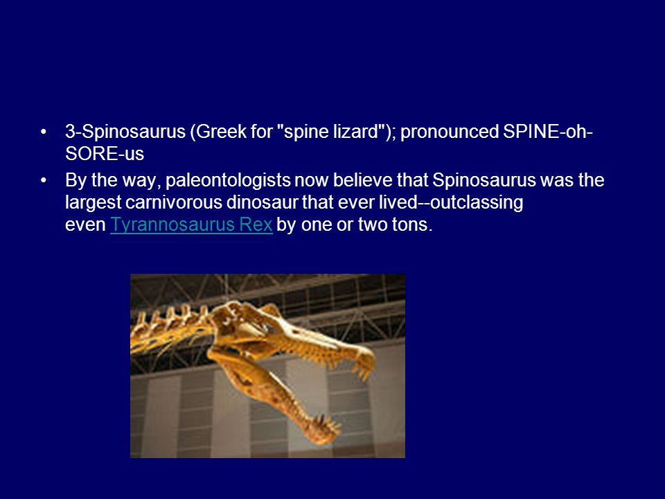 3-Spinosaurus (Greek for spine lizard ); pronounced SPINE-oh-SORE-us