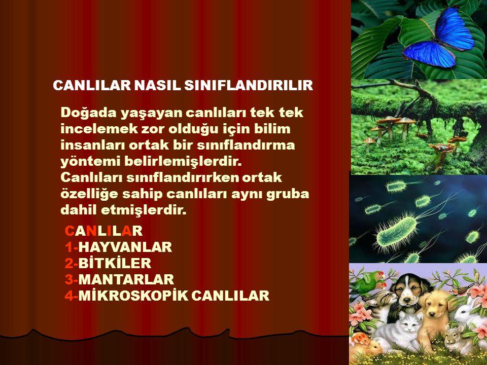 CANLILAR NASIL SINIFLANDIRILIR