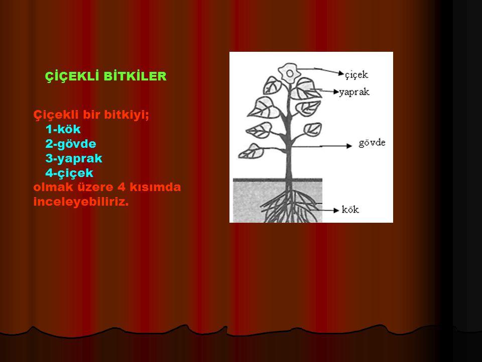 ÇİÇEKLİ BİTKİLER Çiçekli bir bitkiyi; 1-kök. 2-gövde.