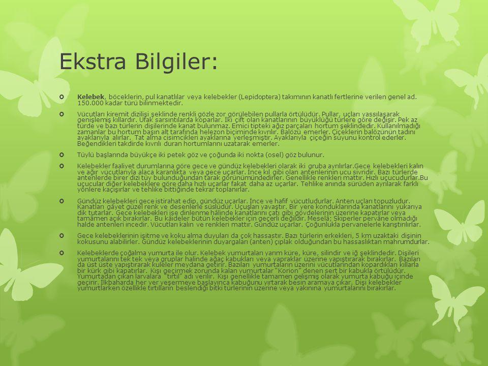 Ekstra Bilgiler: