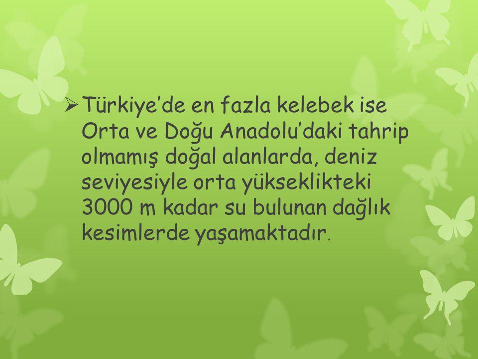 Türkiye'de en fazla kelebek ise Orta ve Doğu Anadolu'daki tahrip olmamış doğal alanlarda, deniz seviyesiyle orta yükseklikteki 3000 m kadar su bulunan dağlık kesimlerde yaşamaktadır.