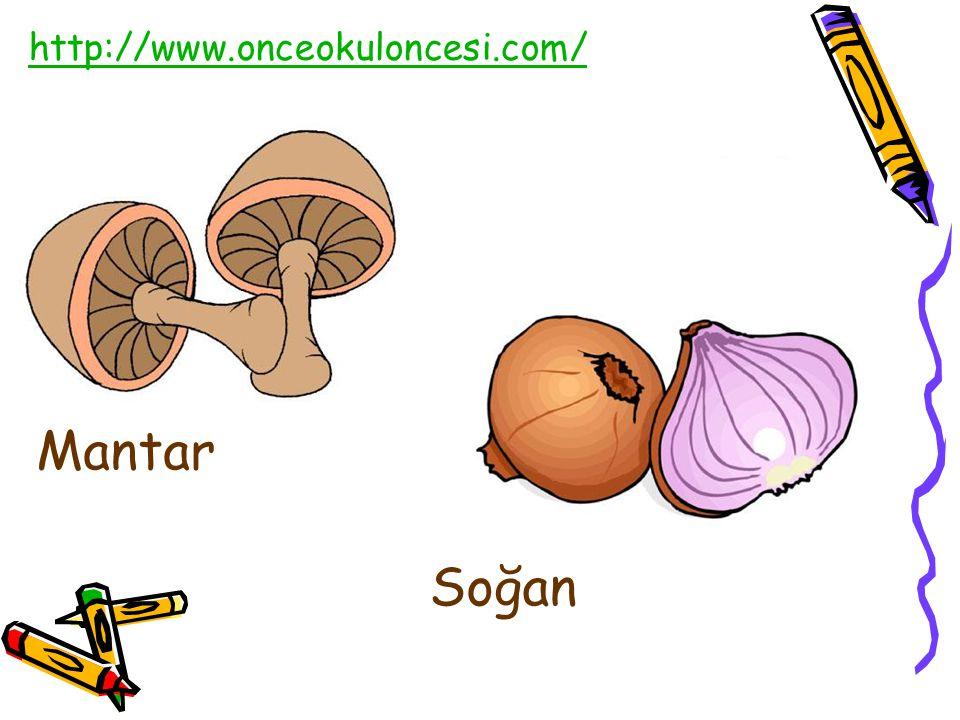http://www.onceokuloncesi.com/ Mantar Soğan