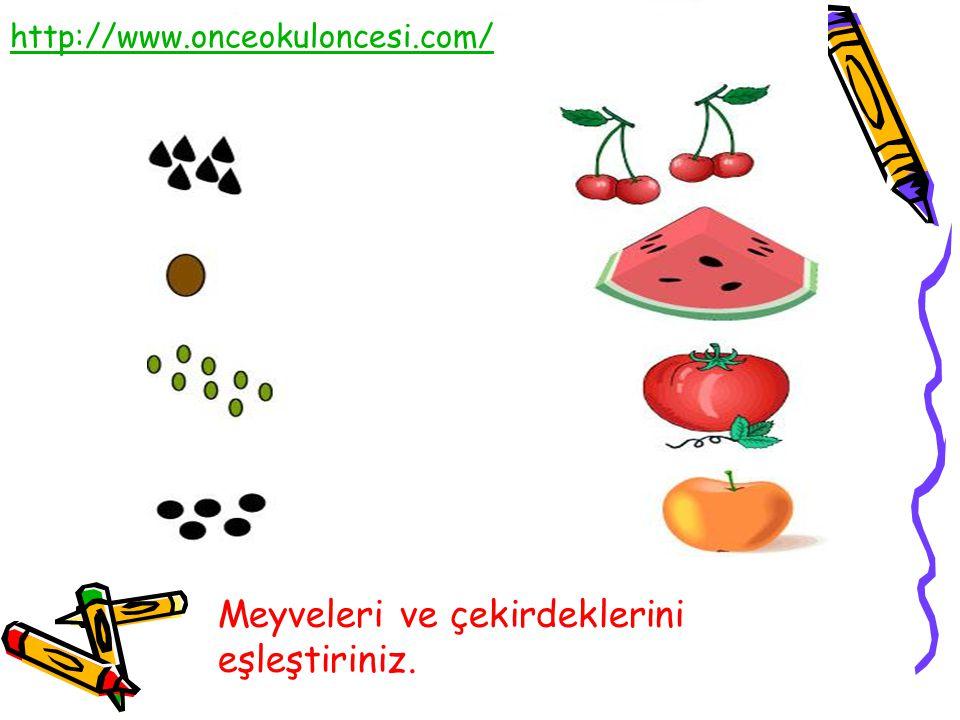 Meyveleri ve çekirdeklerini eşleştiriniz.
