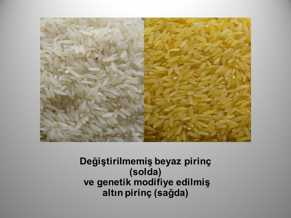 Değiştirilmemiş beyaz pirinç (solda)