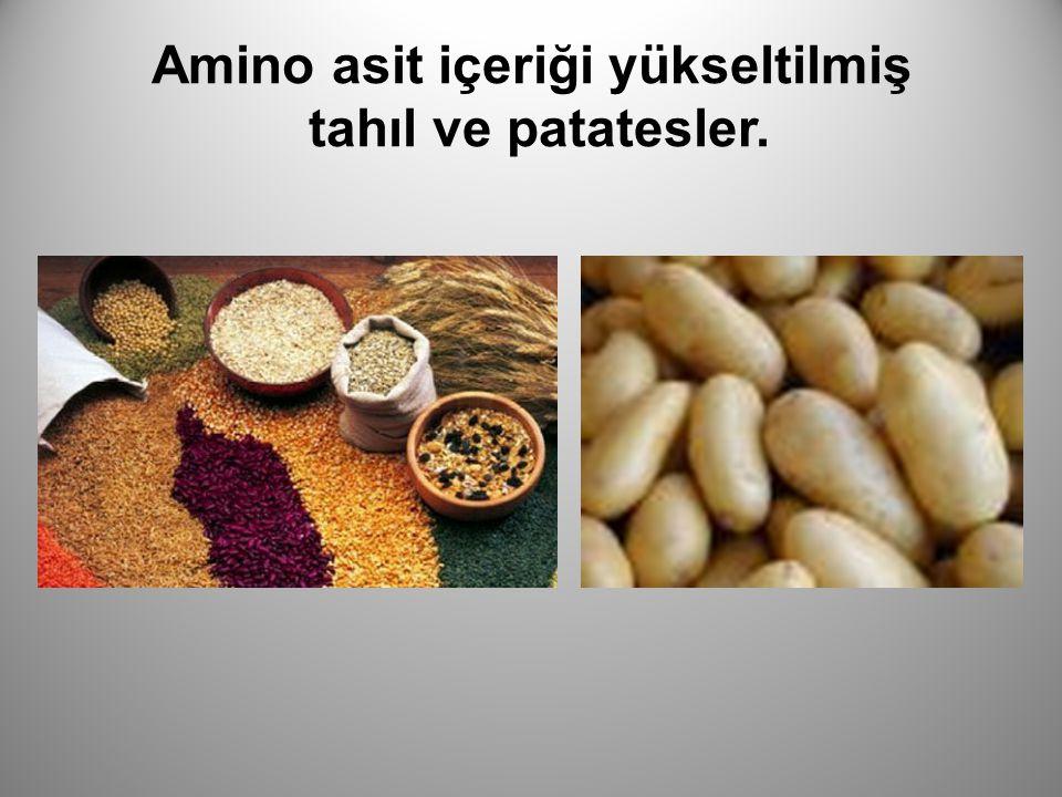 Amino asit içeriği yükseltilmiş tahıl ve patatesler.