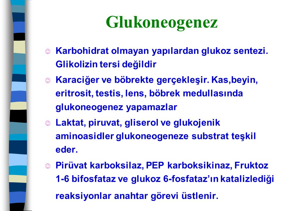 Glukoneogenez Karbohidrat olmayan yapılardan glukoz sentezi. Glikolizin tersi değildir.