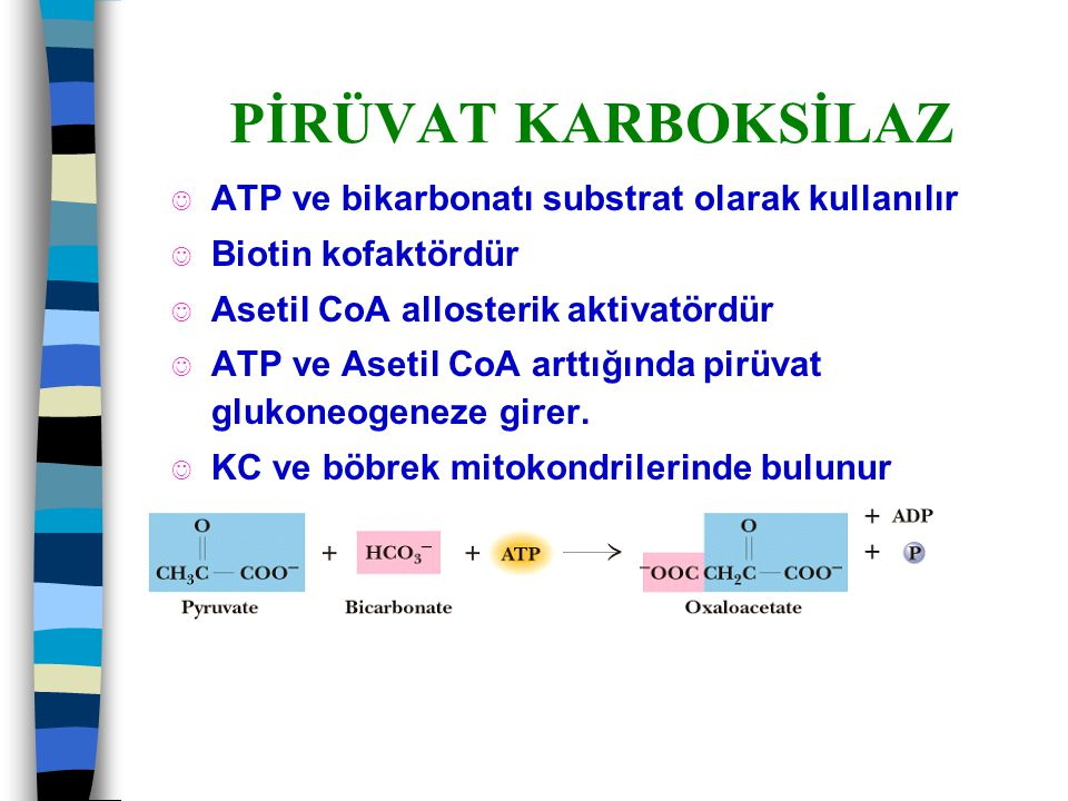 PİRÜVAT KARBOKSİLAZ ATP ve bikarbonatı substrat olarak kullanılır