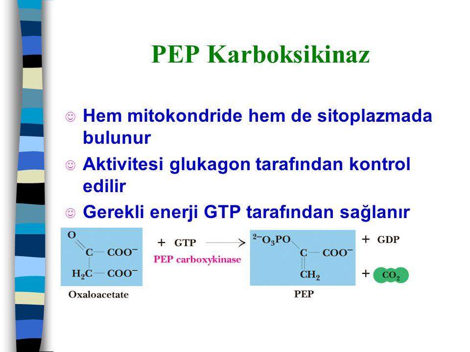 PEP Karboksikinaz Hem mitokondride hem de sitoplazmada bulunur
