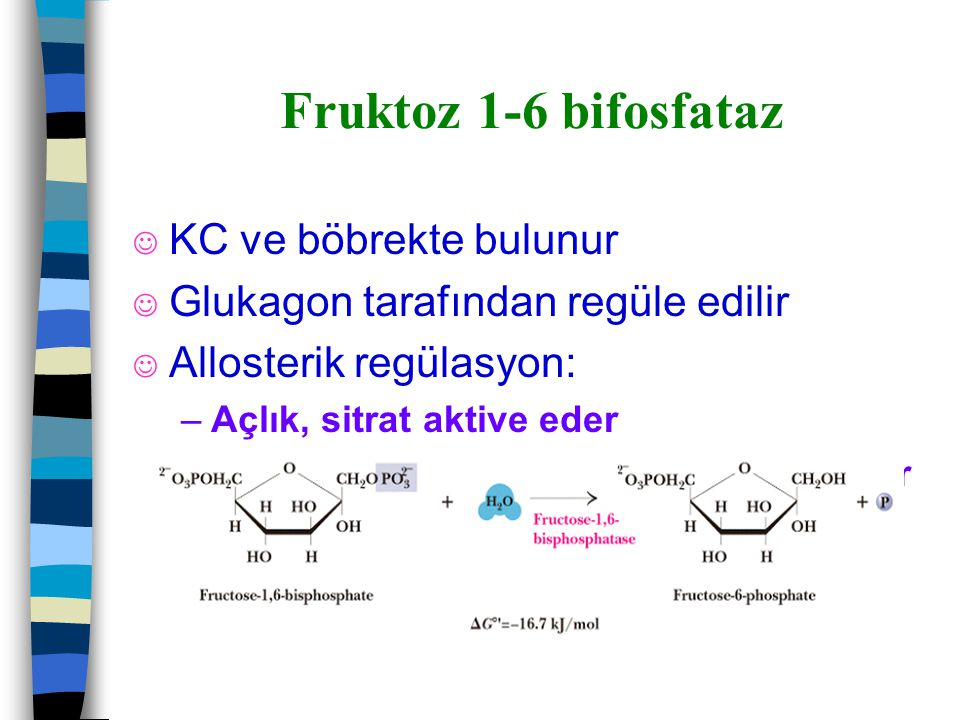 Fruktoz 1-6 bifosfataz KC ve böbrekte bulunur