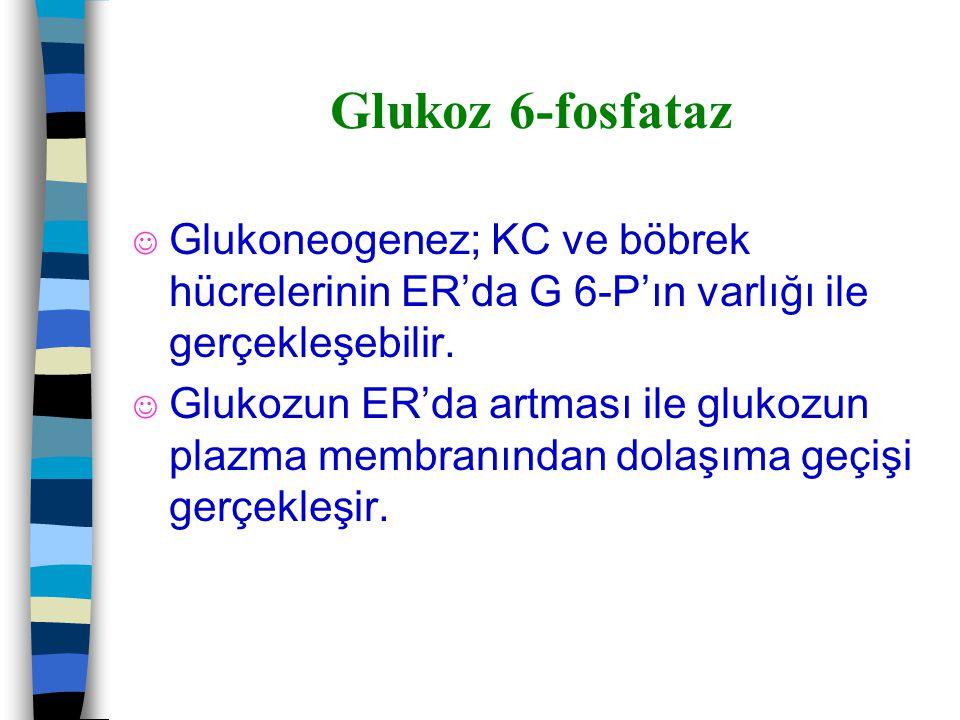 Glukoz 6-fosfataz Glukoneogenez; KC ve böbrek hücrelerinin ER'da G 6-P'ın varlığı ile gerçekleşebilir.