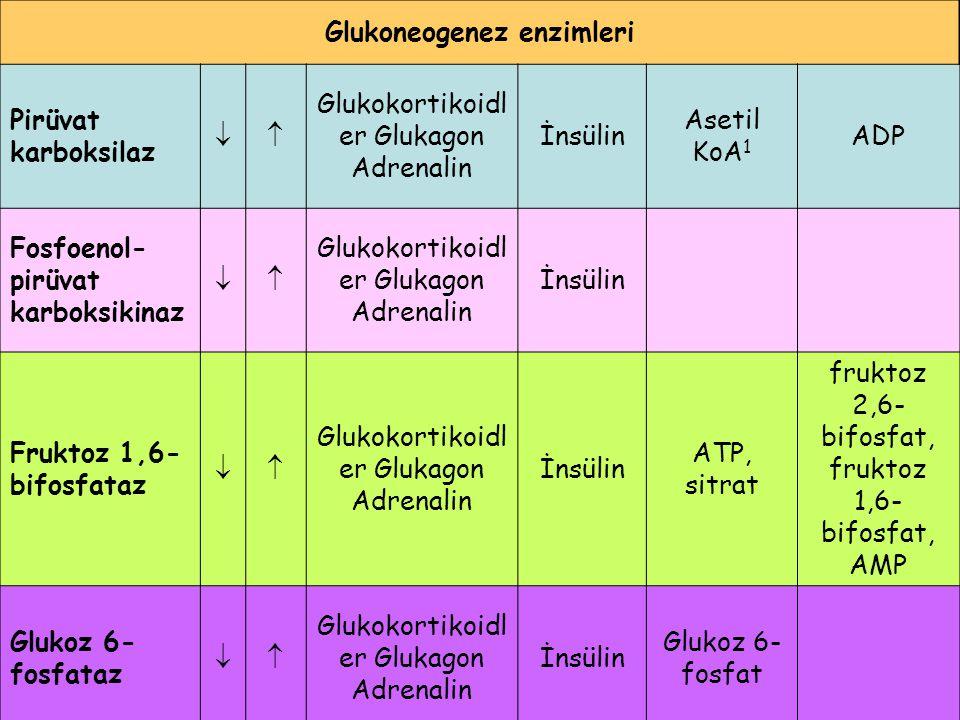 Glukoneogenez enzimleri
