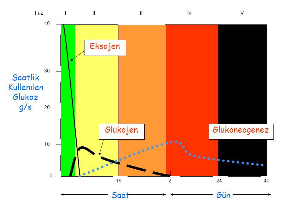 Eksojen Saatlik Kullanılan Glukoz g/s Glukojen Glukoneogenez Saat Gün