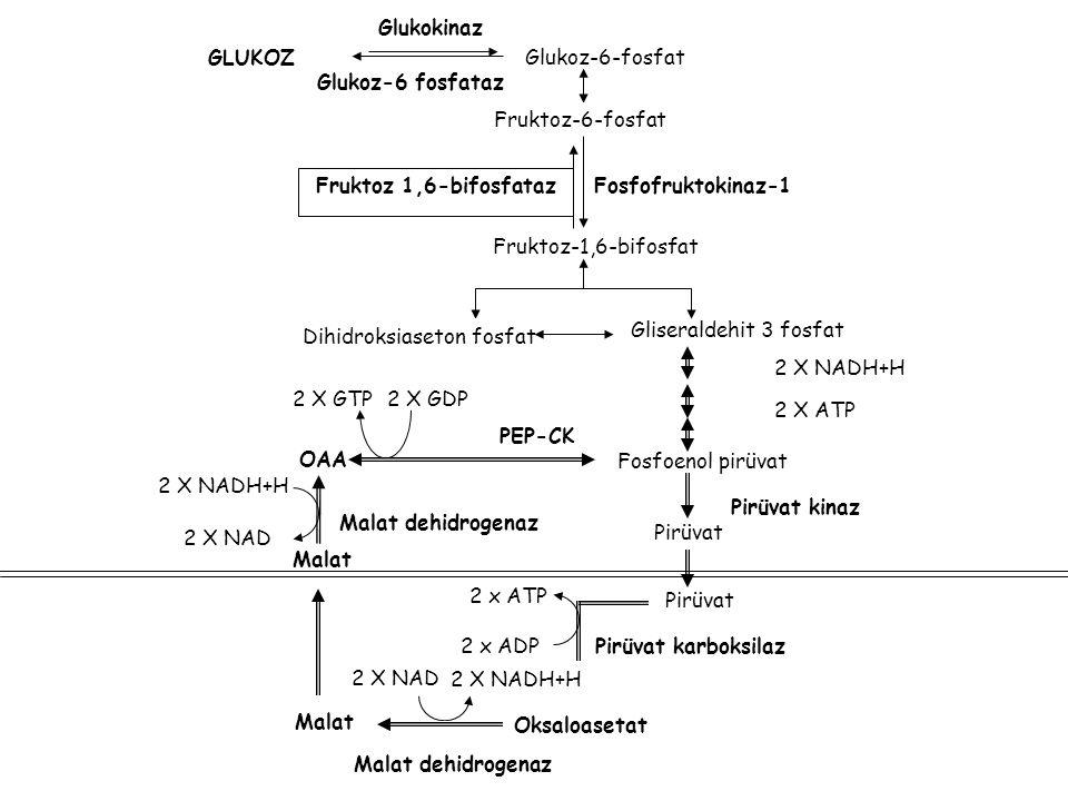 Glukokinaz GLUKOZ. Glukoz-6-fosfat. Glukoz-6 fosfataz. Fruktoz-6-fosfat. Fruktoz 1,6-bifosfataz.