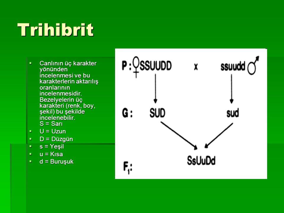 Trihibrit