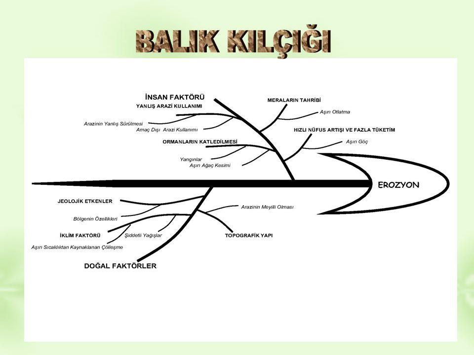 BALIK KILÇIĞI