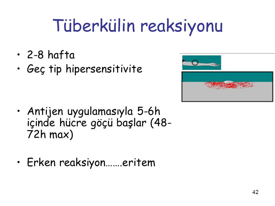 Tüberkülin reaksiyonu